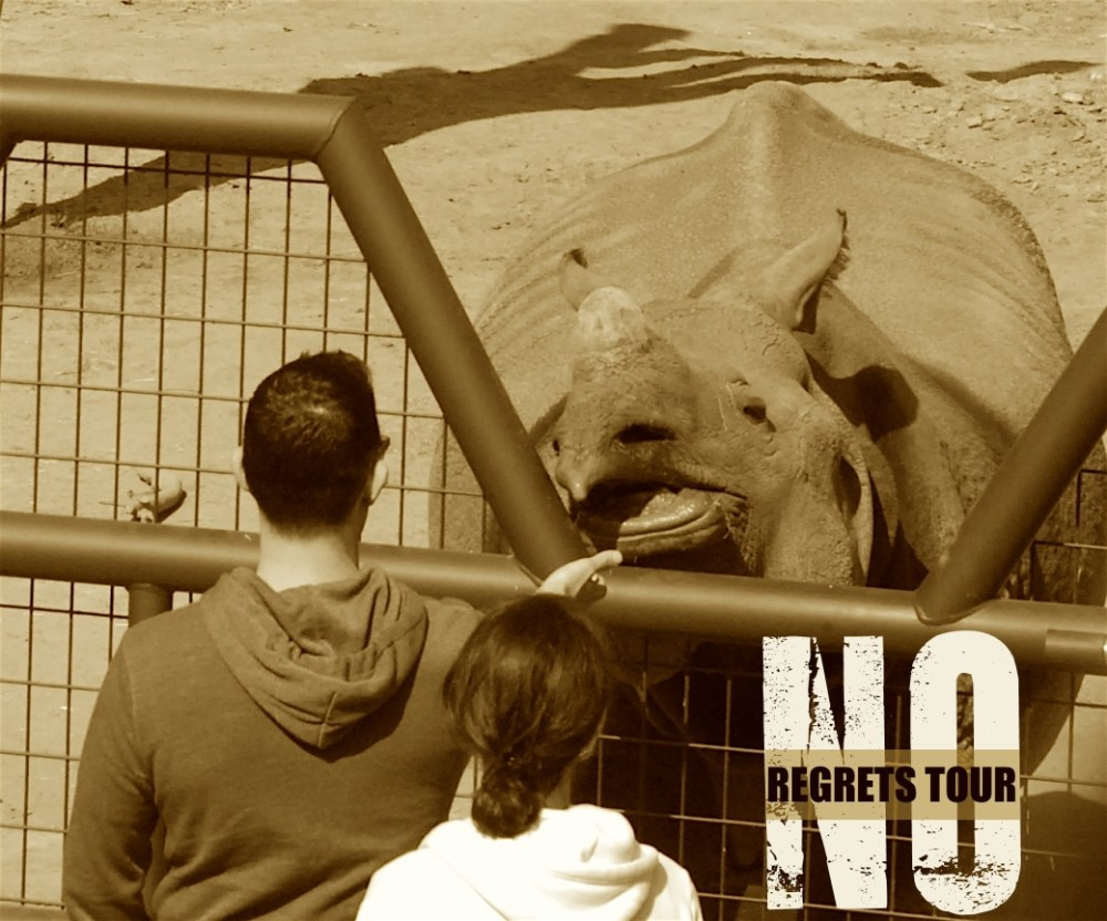 people feeding rhinoceros San Diego Zoo
