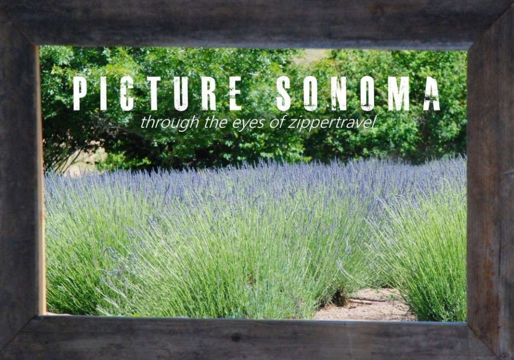 Matanzas Creek lavender fields Sonoma California