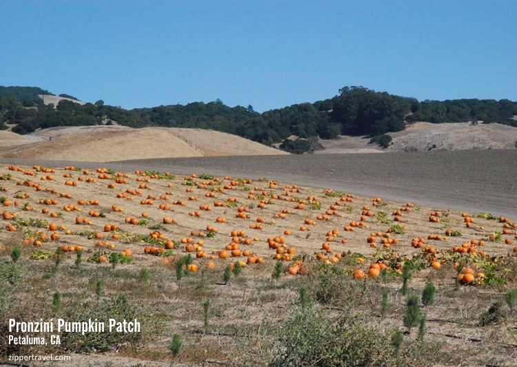 Pronzini pumpkin patch Petaluma CA