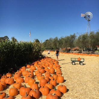 Stanly Lane pumpkin patch Napa California