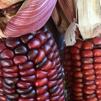 Decorative corn close up