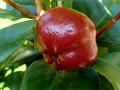 Das weiß ich leider nicht sieht aus wie ein Apfel ist aber keiner.