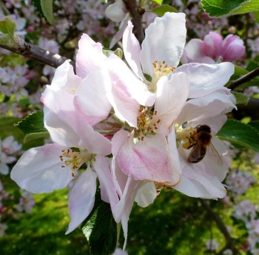 Blume mit Biene.