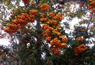Und auch schön Orange.