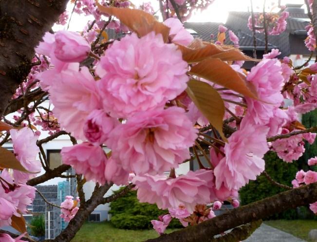 Kischblüten.