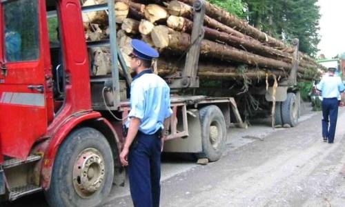 Acțiuni ale polițiștilor pentru verificarea legalității deținerii de material lemnos