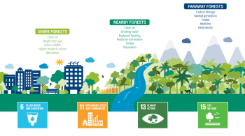 forests-value-cities-sdg-goals_0