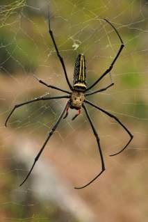 Beitou Hills Taipei pavouk