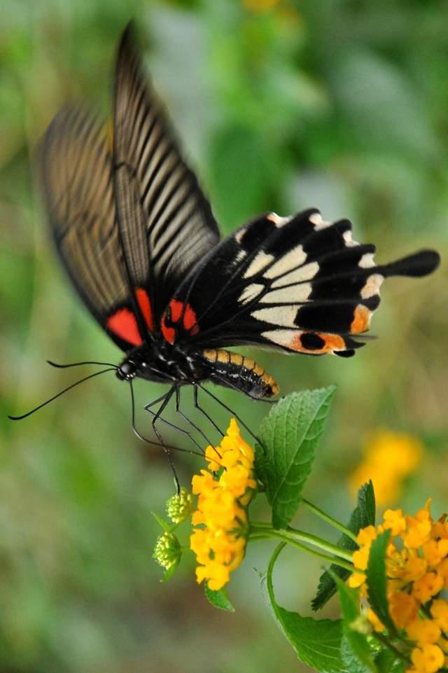 Beitou Hills Taipei motýl