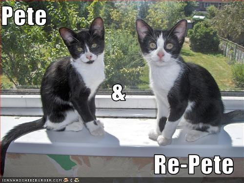 funny-pictures-cats-look-very-much-alike1