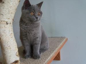 Aktualne zdjęcia kociaków do wydania lub do rezerwacji z 21.09