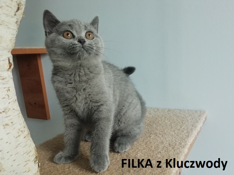 Obrazek posiada pusty atrybut alt; plik o nazwie FILKA3.jpg