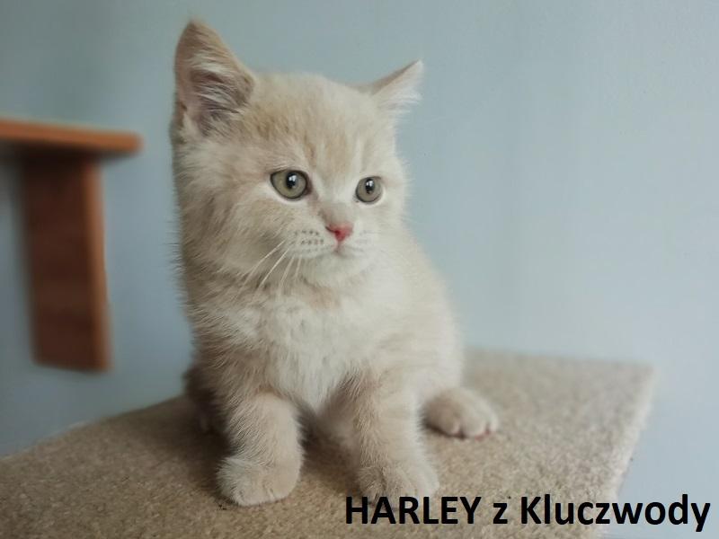 Obrazek posiada pusty atrybut alt; plik o nazwie HARLEY2.jpg