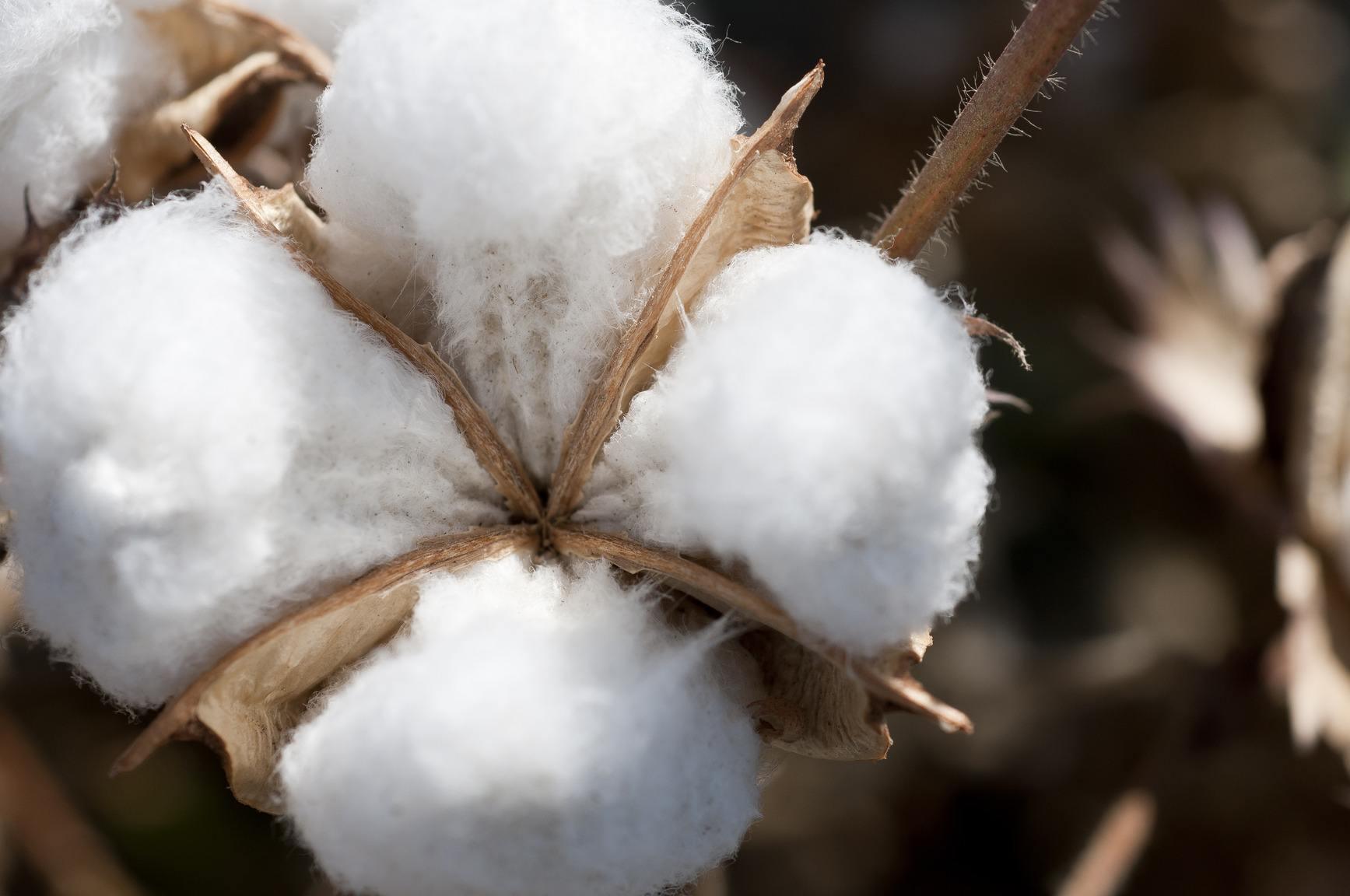 wash smarter & cotton