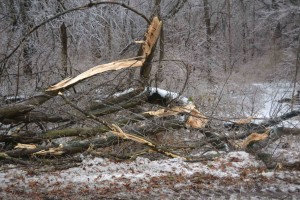 ice-broken-trees