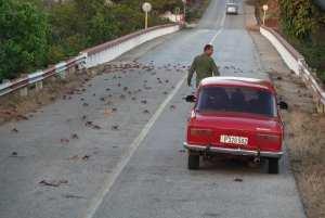 טיול מאורגן לקובה