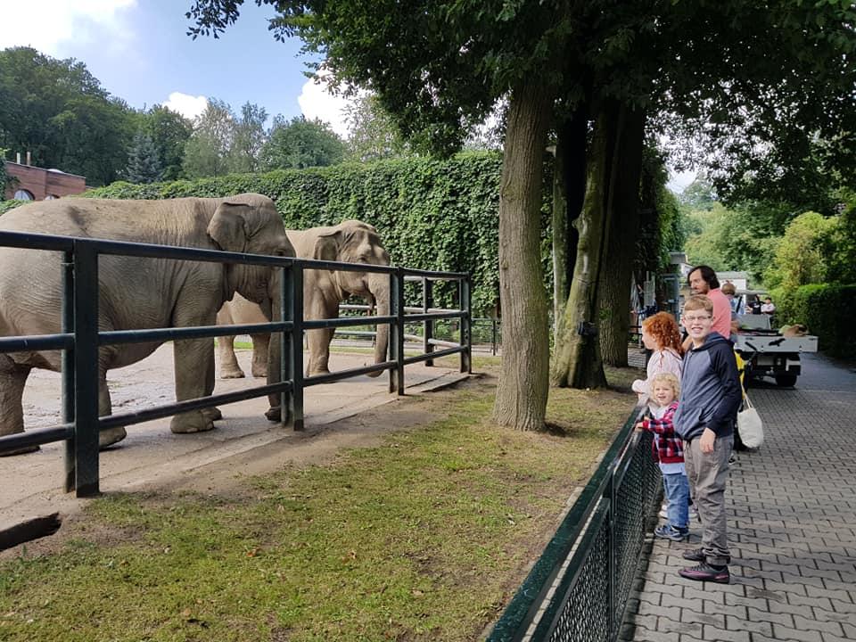 בגן החיות של קרקוב