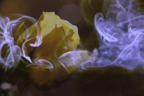 aroma_flower