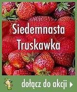 Siedemnasta Truskawka