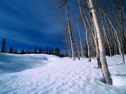 Красивые фото Берёзы в снегу, скачать бесплатно красивые ...