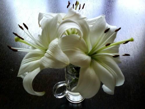 Красивые фото Лилии в вазе, скачать бесплатно красивые ...