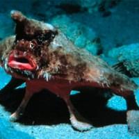 Chimery i Matrony z Głębi Oceanów