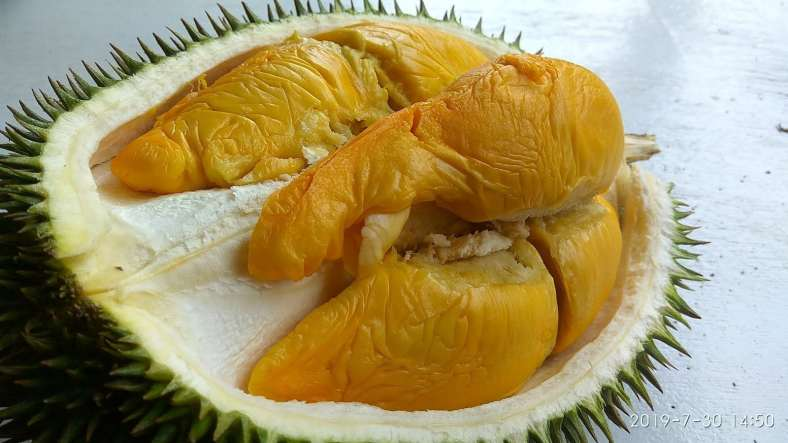 durian ioi