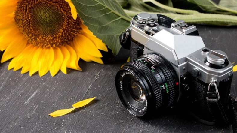 A retro camera with a yellow sunflower