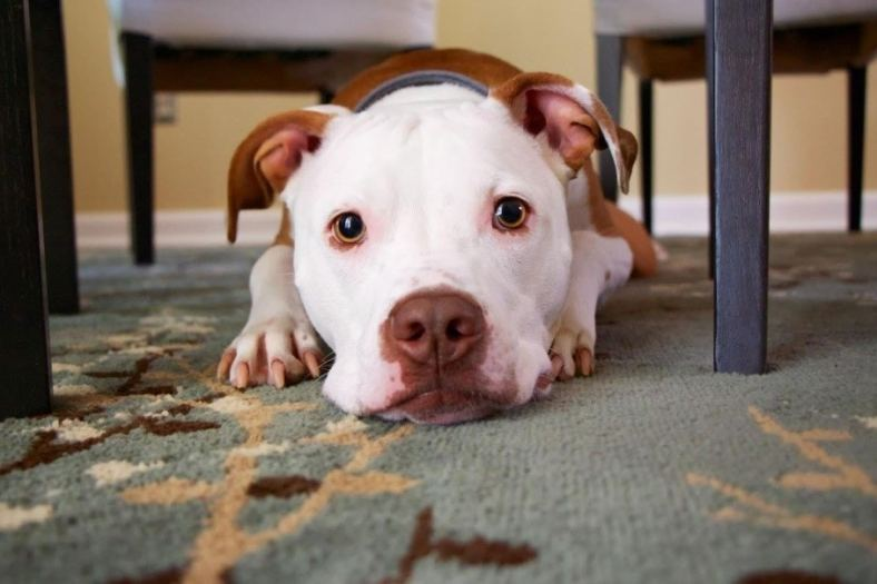10 Ways to Prevent Electric Hazards with Pets 5