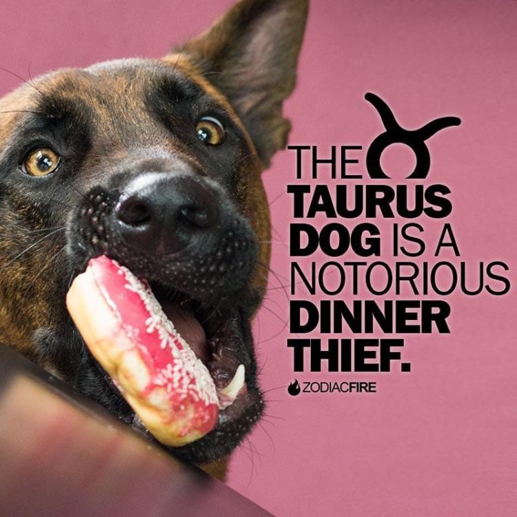 The 12 Dogs Of The Zodiac... - Zodiac Fire