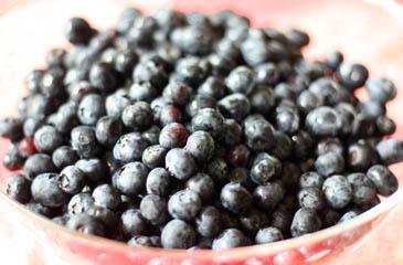 Bowl of fresh blueberries | ZoëBakes | Photo by Zoë François