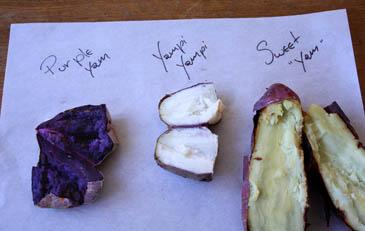 Comparing sweet potatoes and yams in the sweet potato vs yam debate