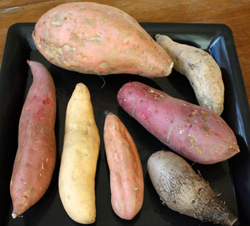 "7 different types of sweet potatoes and ""yams"" 