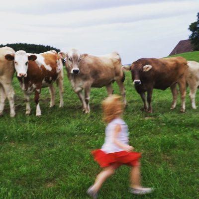 Corriendo delante de unas vacas