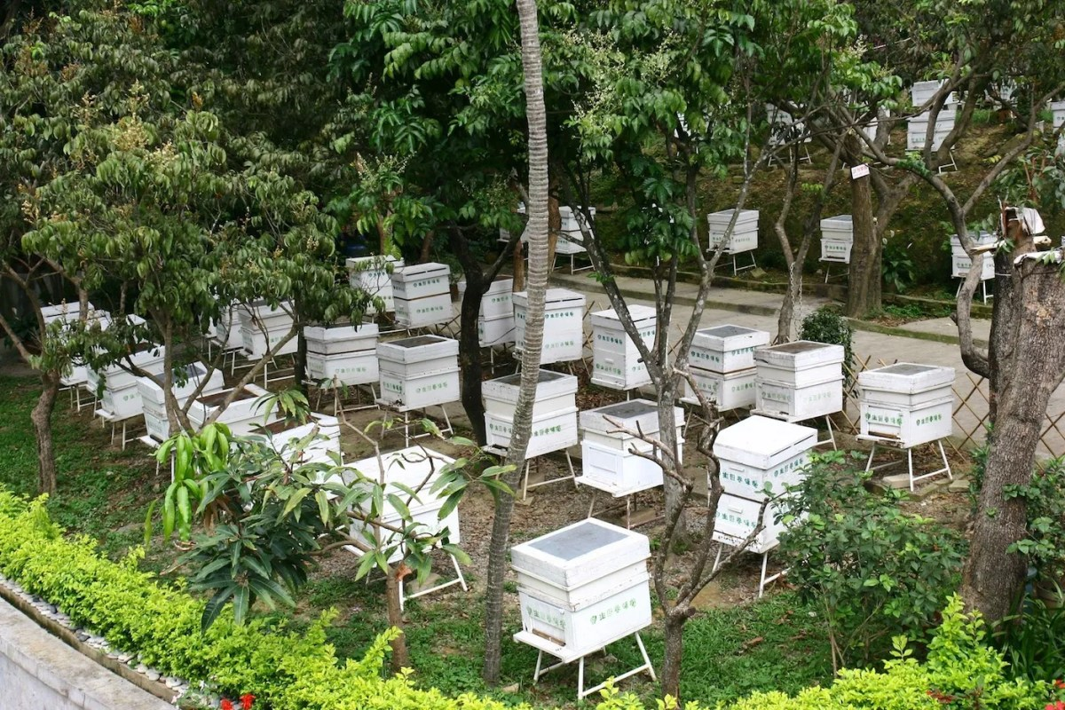 Courtesy of Po Sang Yuen Bee Farm