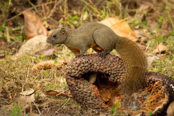 squirrel hong kong wildlife