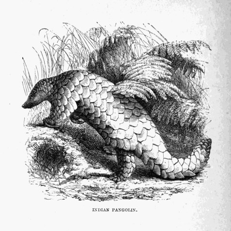 An illustration from the 1873 book The Tropical World by G. Hartwig