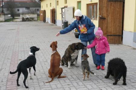 Lovasok és az ő kutyáik. :-)
