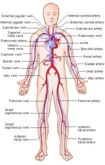 Zombie Vascular System