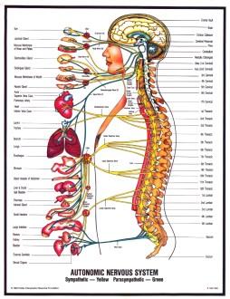 Zombie Nervous System