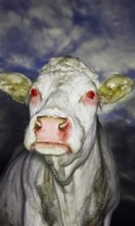 Zombie Mad Cow