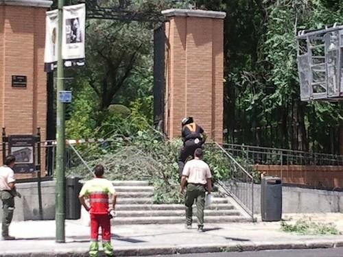 Las ramas colapsan el acceso al parque A. Molla (Zonaretiro.com)