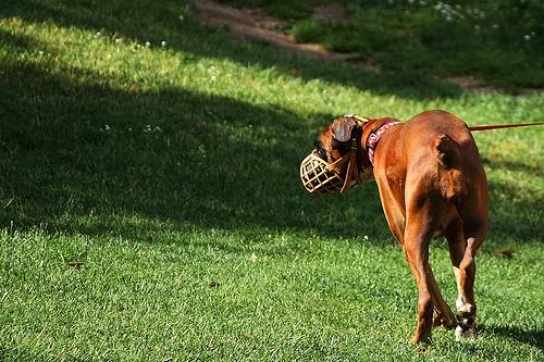perro parque retiro madrid
