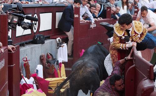 El diestro José Garrido observa al novillo - LV
