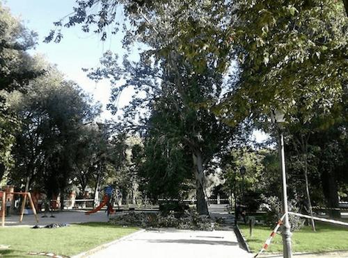 Imagen de la rama caída el viernes por la tarde @PatoLupo  15 h