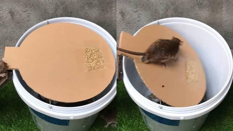Jebakan Perakangkap Tikus