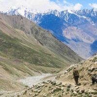 La littérature afghane : une chambre d'écho