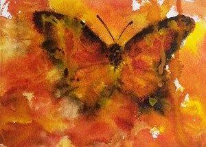 oj butterflywp