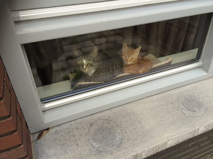 katten voor raam