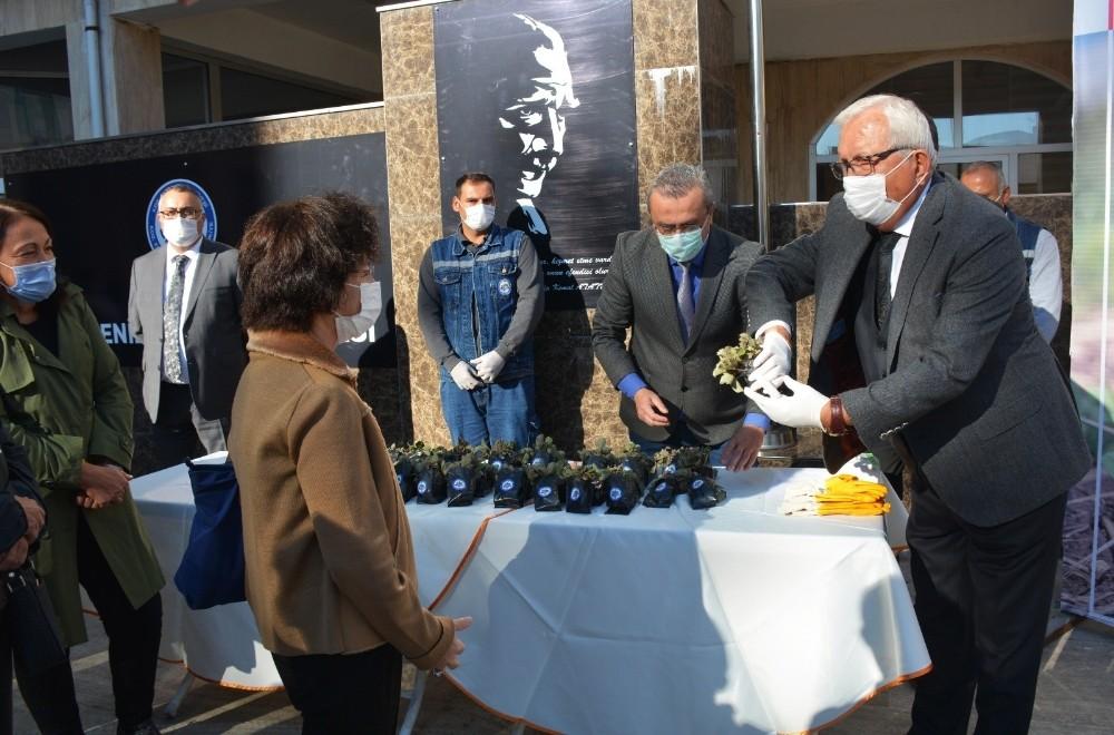 Kdz. Belediyesi 2 bin 500 Osmanlı Çileği fidesi dağıttı